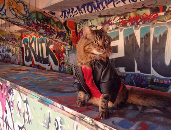 Joann Biondi - Graffiti - Cat