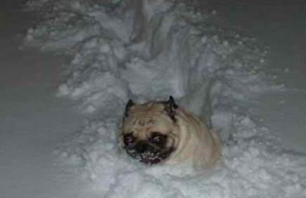 funny picture dog in snow