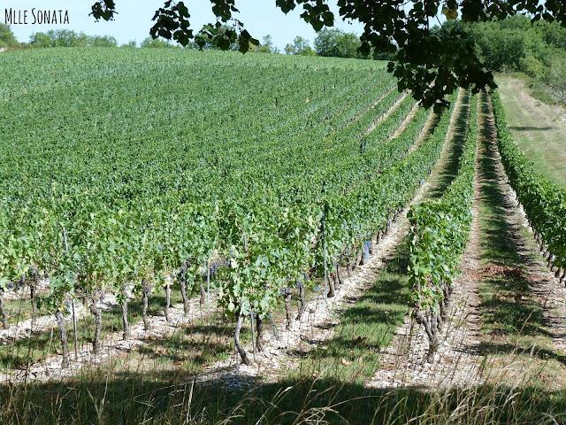 Randonnée dans le lot Cahors vignes