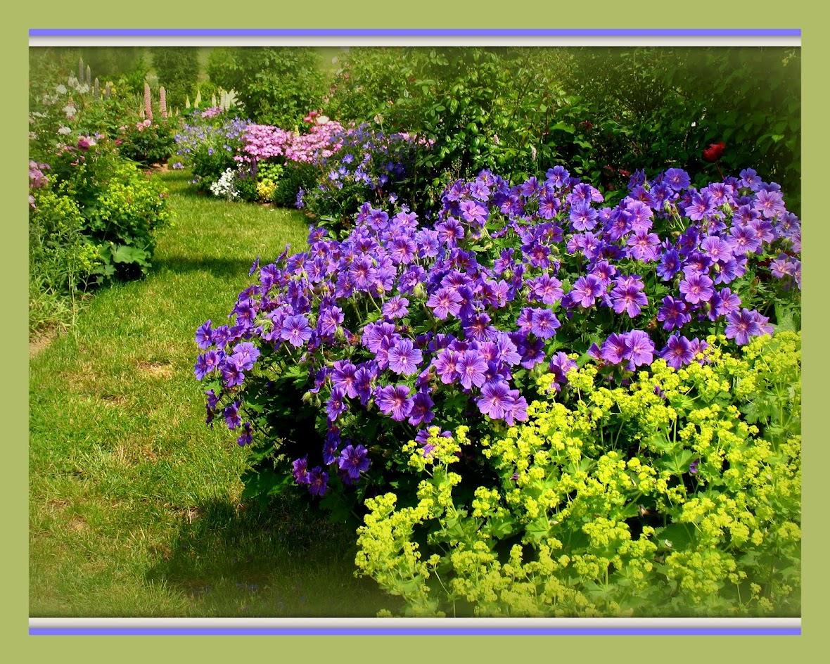 Roses du jardin ch neland h liotrope marine for Le jardin imperial marines de cogolin