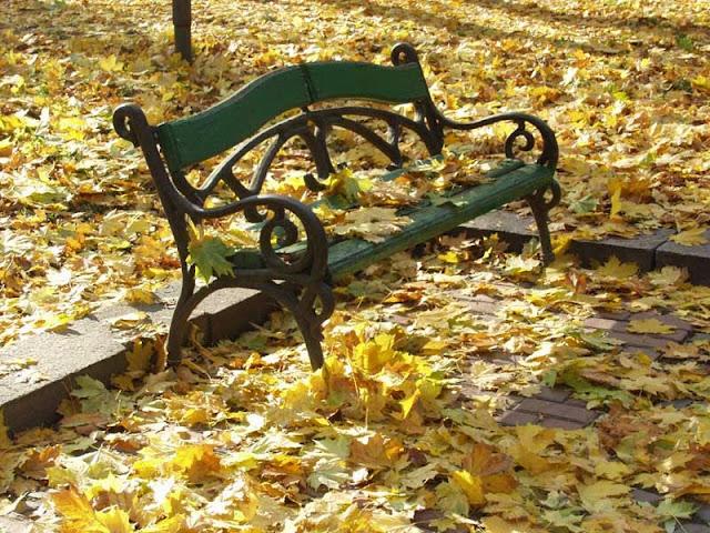 скамейка в осенних листьях