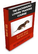 First Class Dachshund Training Course