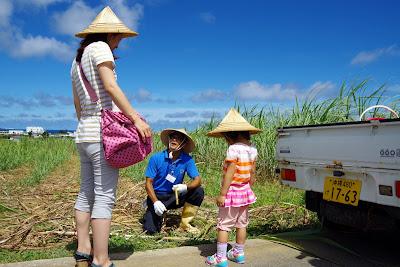 沖縄旅行 体験/観光 サトウキビ 刈り 収穫