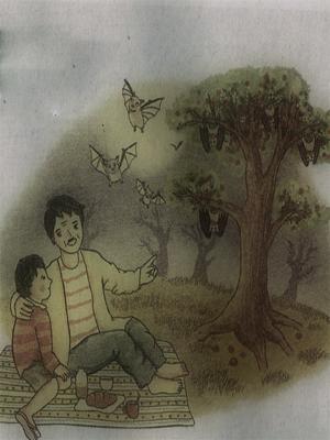 Misteri Pohon Rambutan