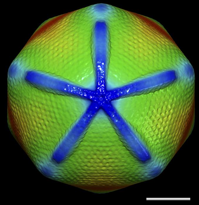 Ученые выяснили поразительные факты о гигантских вирусах