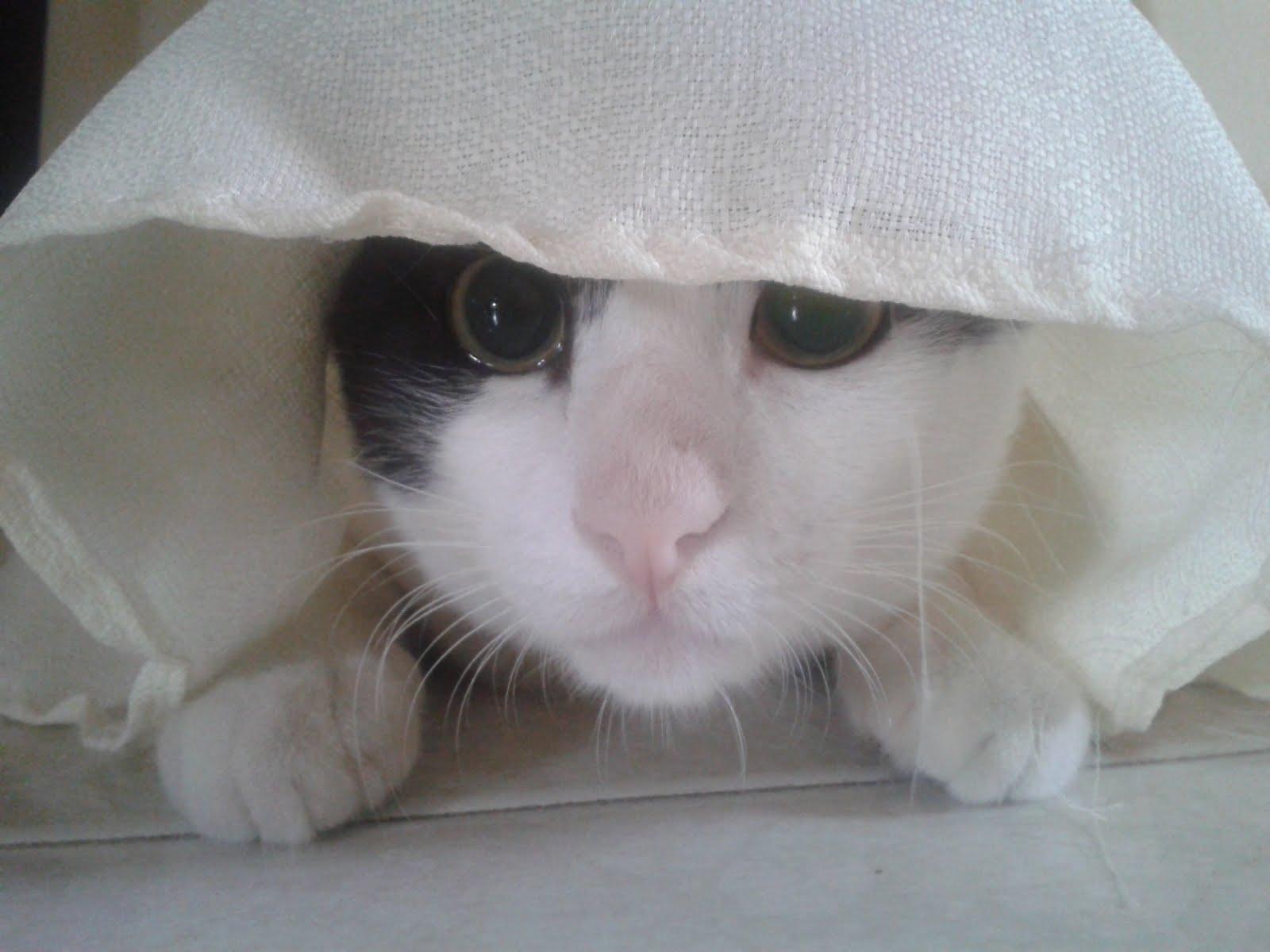 El Señor Gato