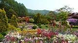 เทศกาลดอกไอริส ที่ The Garden of Morning Calm