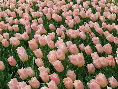 HD Flowers Widescreen Wallpapers