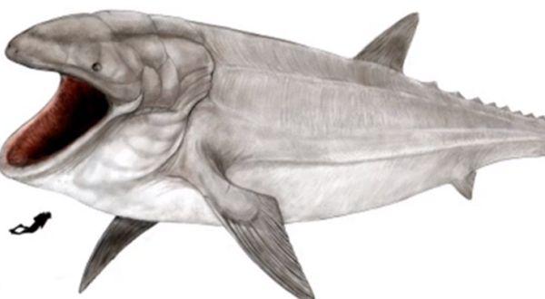 Ditemukan Fosil Ikan Paus Terbesar di Dunia