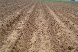 Bed Preparation before Stevia Cultivation