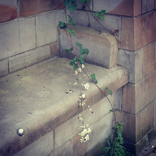 Bench with a sprig of white flowers growing across it in Leeds