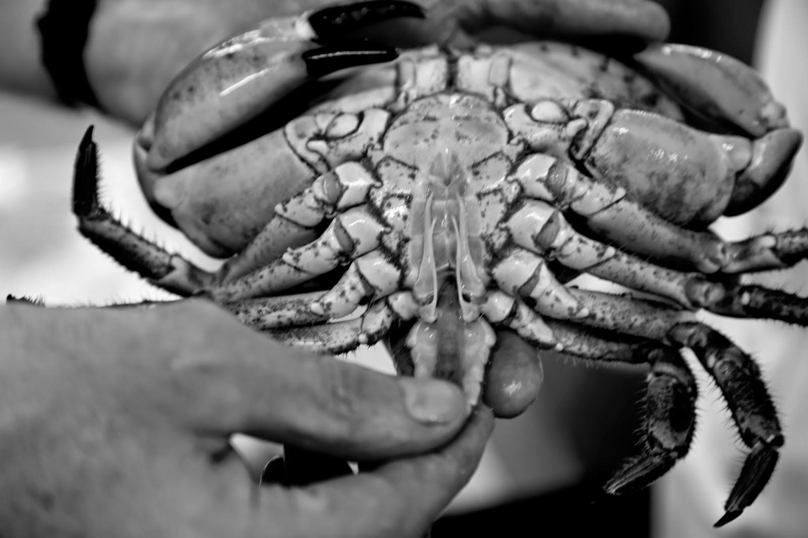 Crab genitals