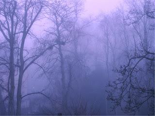 http://www.photoxpress.com/photos-tree-drill+bit-vegetation-146660?referrer_id=Xj9qdHIQyb7etVXie4irtPQ9xtZobSzz