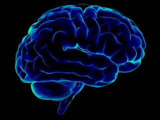 9 Fakta Menarik Otak Manusia