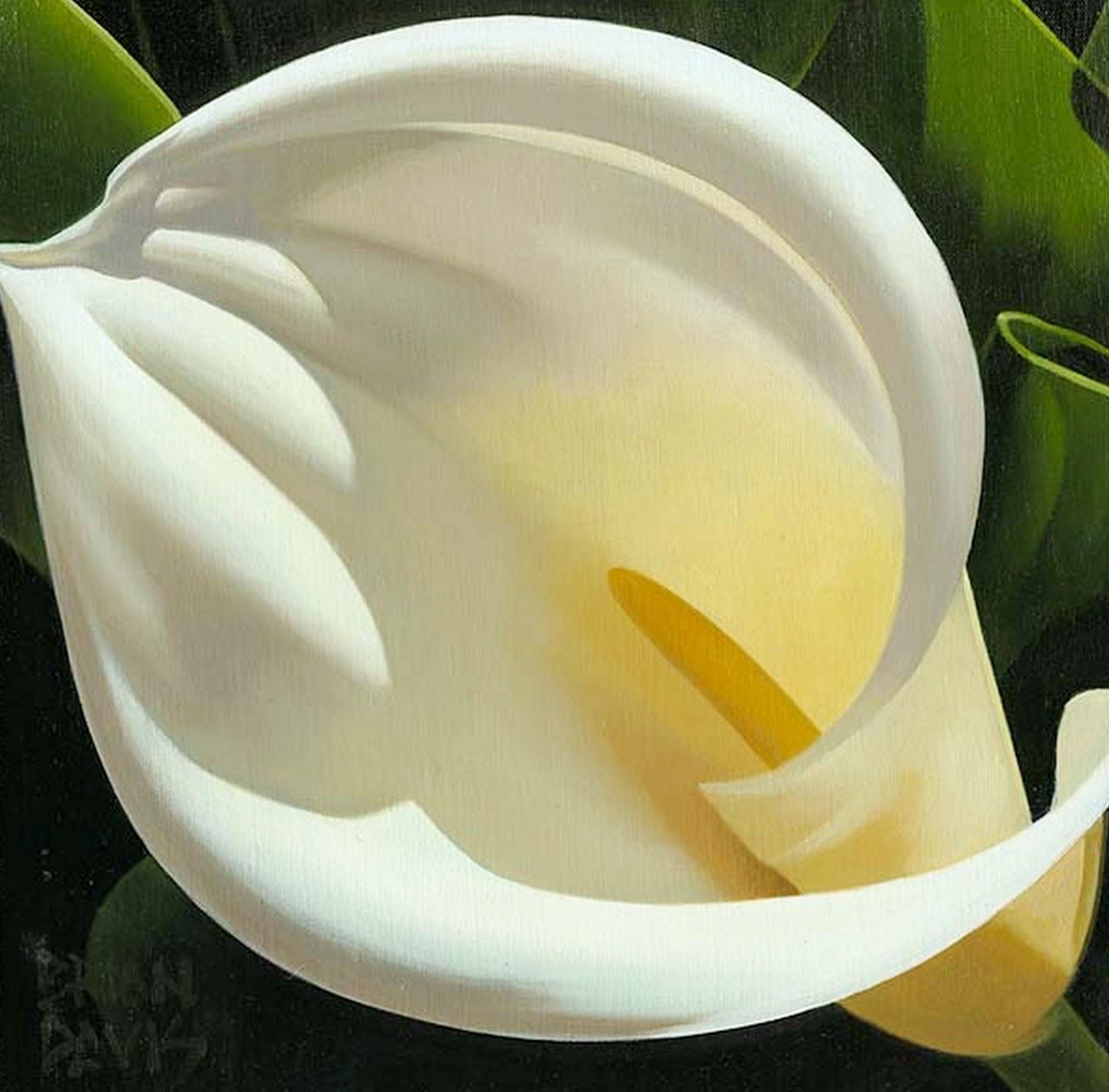 Imagenes De Flores Hermosas Naturales - Flores hermosas con frases de amor para tu pareja