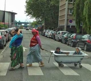 Pourquoi les écologistes adorent les roms 001