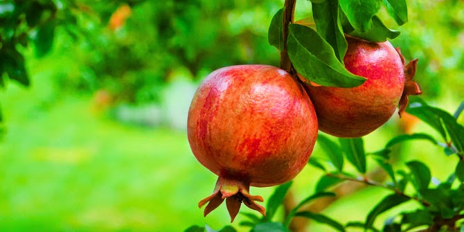 dua bahan alami ampuh sembuhkan penyakit gusi berdarah
