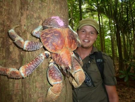 Kepiting Kelapa