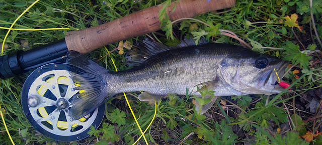 A year on the fly hooking bass with a scrapyard plug a for Bass fishing yard sale