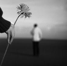Primavera sem flores