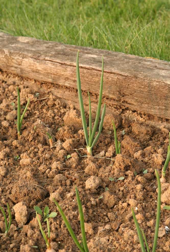 Un jardin potager en hesbaye au potager 17 04 12 for Agencer un jardin potager