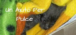 """""""Un Aiuto per Pulce"""" by Alina (Lo Spazio di Lilla)"""