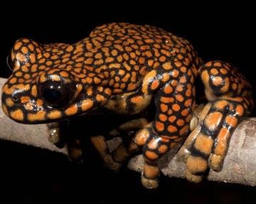 8 Spesies Baru Memakai Nama Seleb