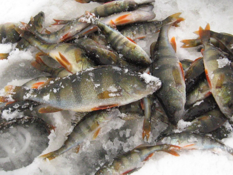 Открытие зимнего рыболовного сезона