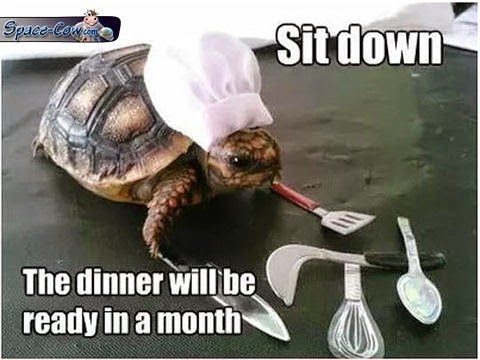 funny cute turtle picture