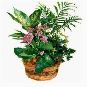 Plants & flowers delivery in Kenya with price