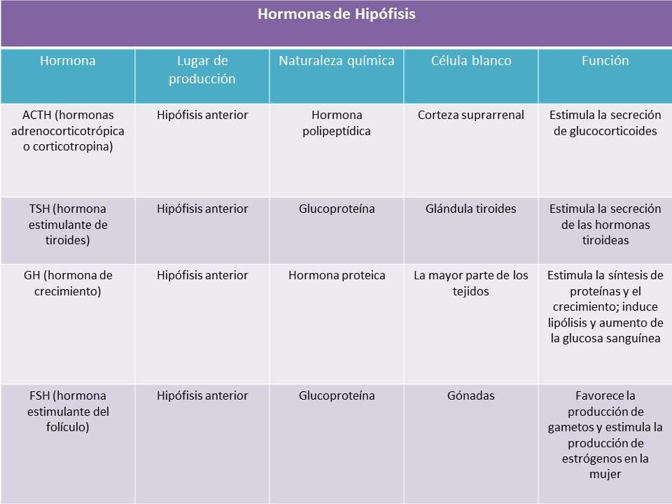 Portafolio de evidencias de Fisiología Básica: hormonas de ...