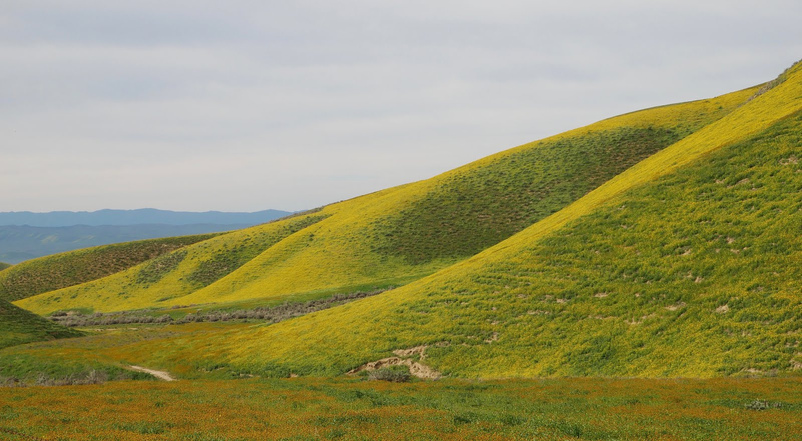The Carrizo Plain in Super Bloom