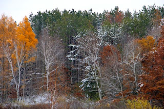 November trees, some with snow, some without