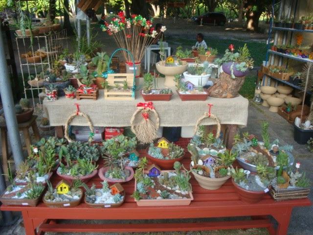 mini jardim curitiba: mas as plantinhas eram o grande destaque, e no caso os mini-jardins
