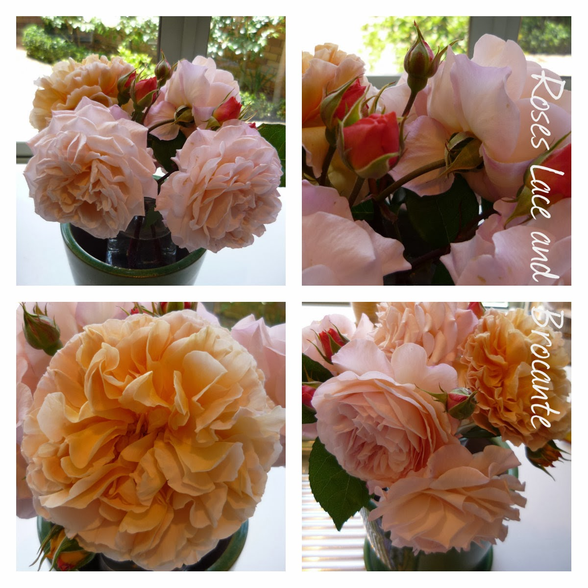 Roses Lace and Brocante Fresh Cut Friday March