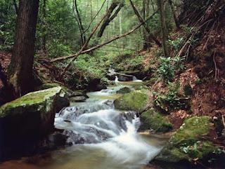 Natural Resources In Transylvania