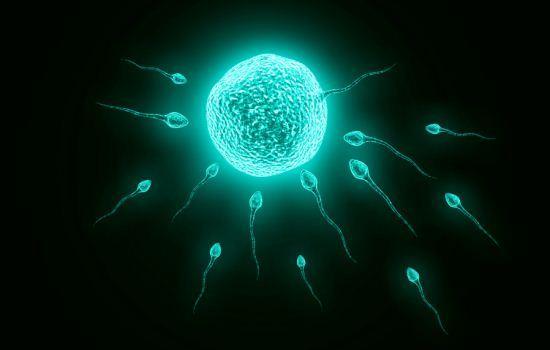 Sperma membuahi sel telur
