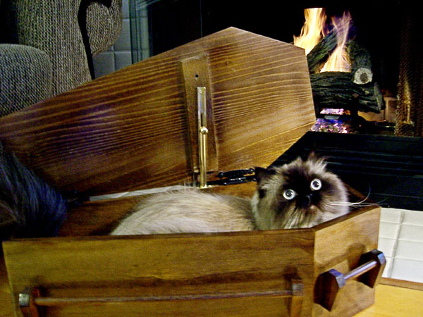 how to build a cat coffin