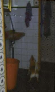 Coco mira toalla