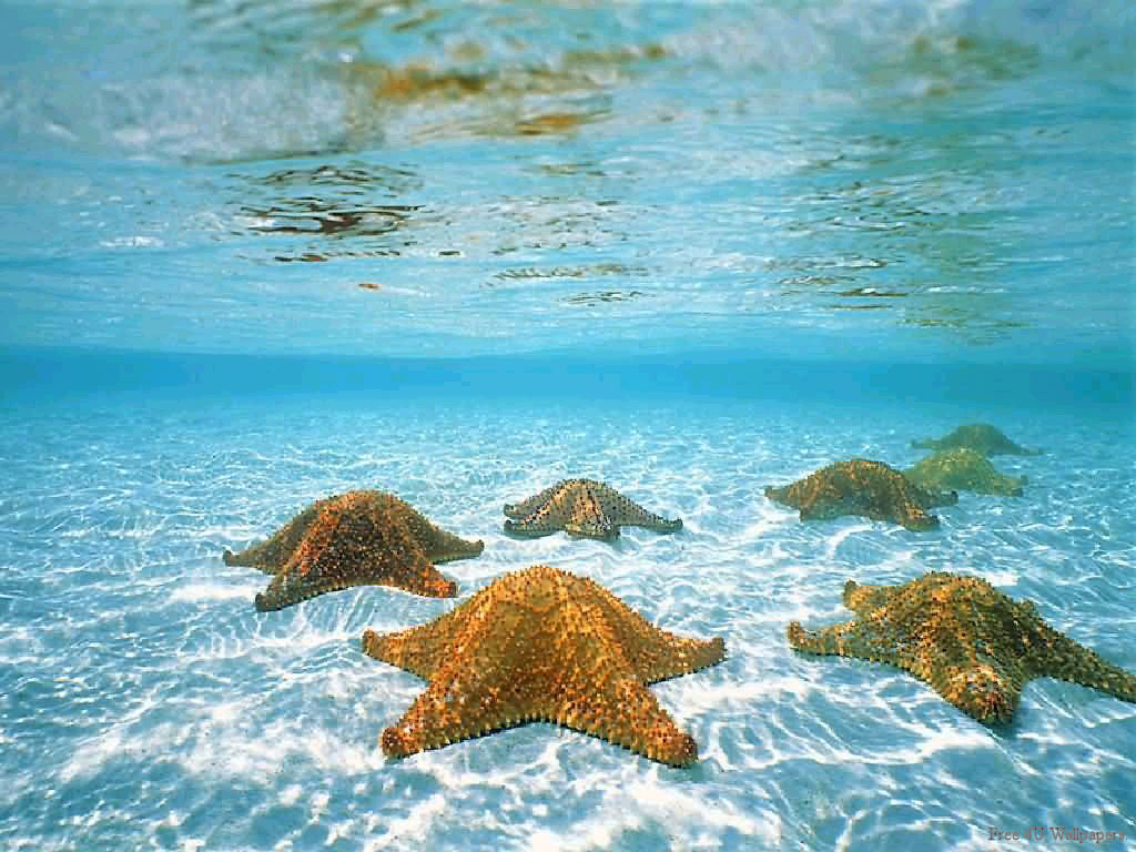 Soalan No. 1 - Makhluk Aneh Di Dasar Lautan