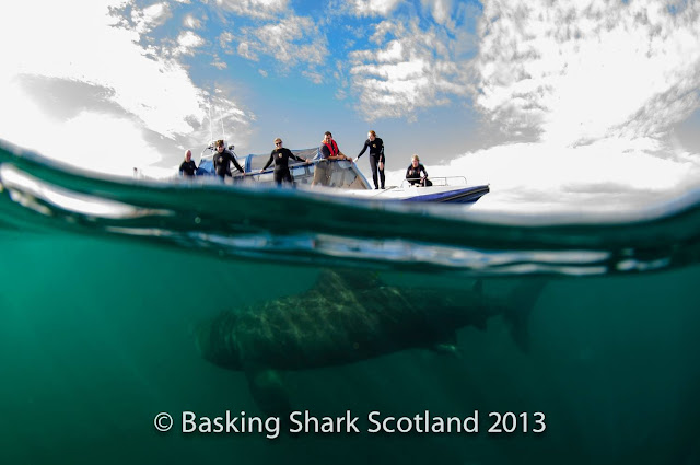 Watching a Basking Shark swim under our boat - Isle of Coll, Scotland