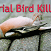 Serial Bird Killers