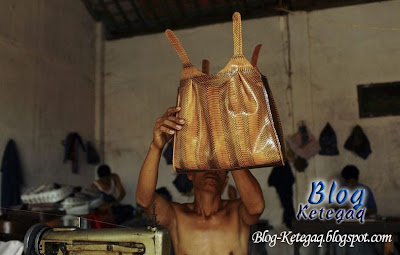 Kejamnya penghasilan beg kulit ular
