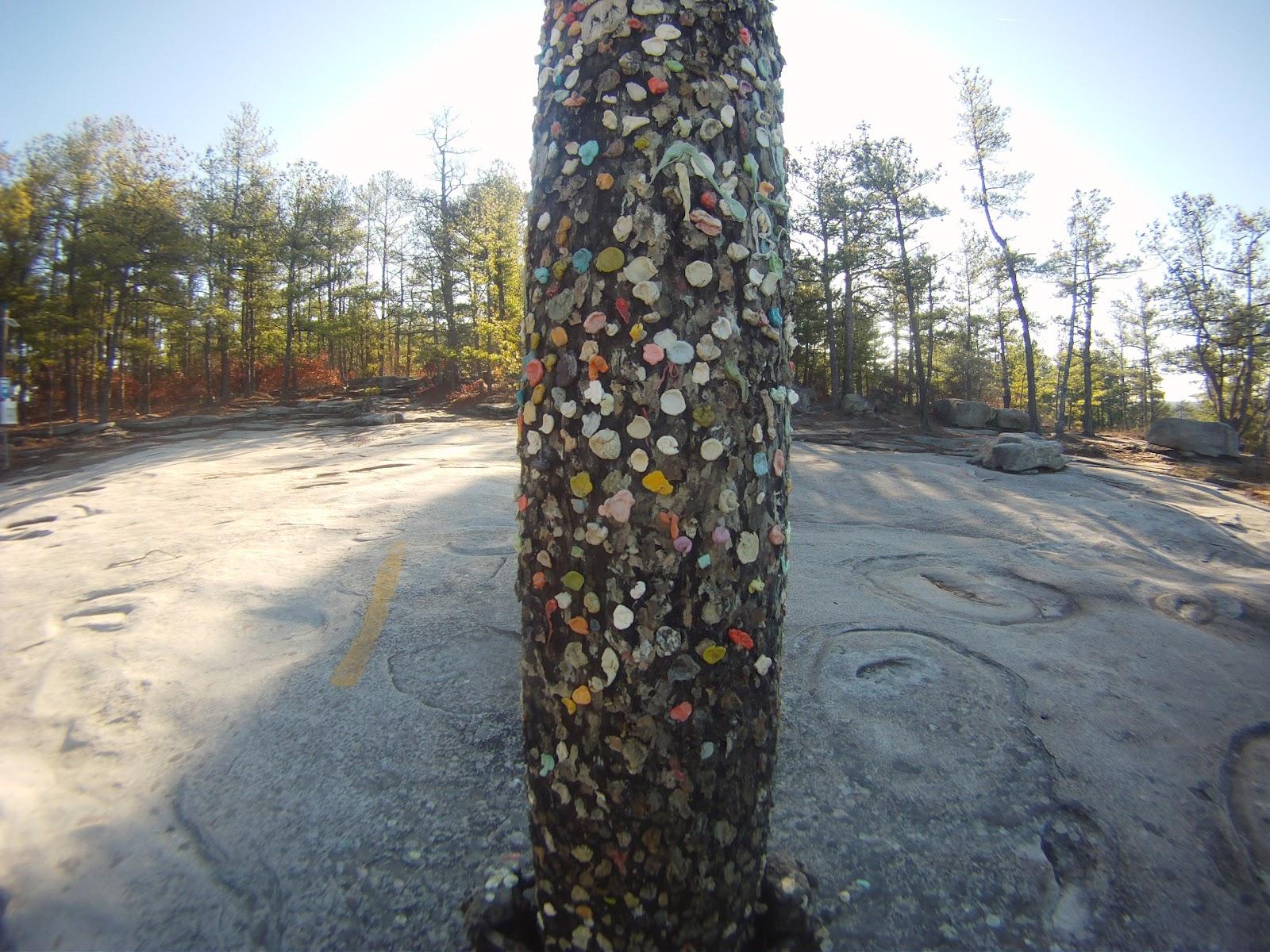 Gum Pole Structures