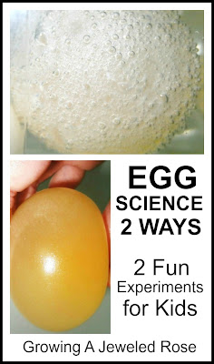 Egg experiments for Kids