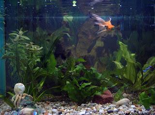 merawat+aquarium+air+tawar Tips Merawat Ikan di Akuarium