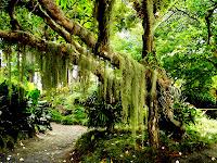 HD Forest Nature Desktop Background