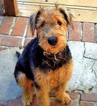 Dog Cute Dog