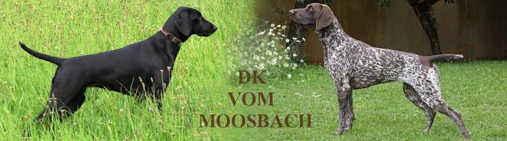 Deutsch Kurzhaar vom Moosbach