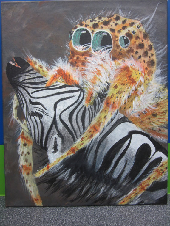 a jumping spider attacks and feasts on the throat of a zebra